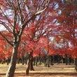 美しき紅葉とイルミ!