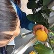 自家製レモン+ハチミ…