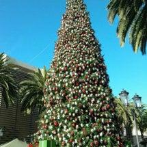 大きなクリスマスツリ…
