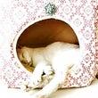 ◆猫さまの寝相が無防…