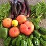 ふぞろいの野菜たち