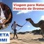 ブラジルのラクダ