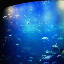 詩一つ『水族館のサナ…