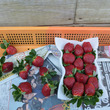 「くろいちご」と農園…