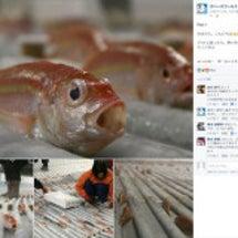 5000匹の魚を氷漬…