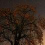 秋が終わり、冬を撮る…