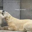 リラのお誕生日に寄せ…