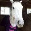 馬の美☆彡歩いて走っ…