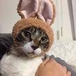 猫のコスプレ