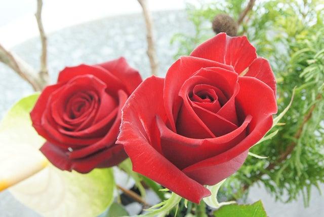サムライという品種の薔薇