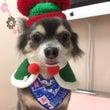 ノワールクリスマス2…