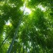 かぐや姫が竹から生ま…