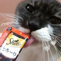 猫ちゃんにシーバとろ…