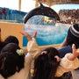 江ノ島水族館♡