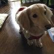 可愛い愛犬の健康管理…