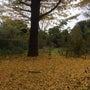秋の芋煮会