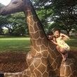 ハワイ旅行7〜8日目…