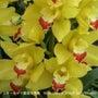 お花の写真のカレンダ…
