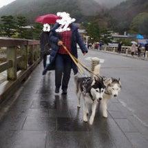 冬だ 京都に行こう!…