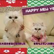 ♥新年のご挨拶~新春…