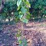 種を蒔き、木を植える…