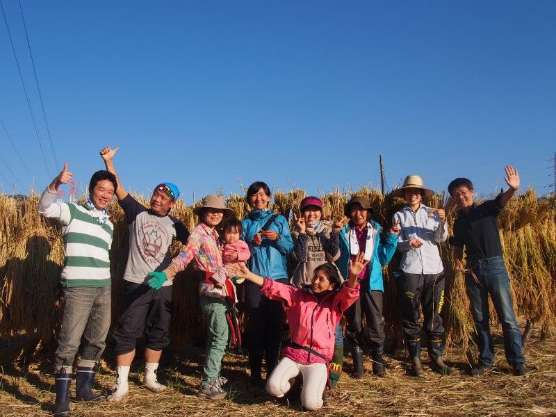 稲刈り 集合写真