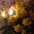 パリで花の仕事をして…