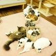 3連休はゆる猫に遊び…