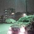 雪 積もりました