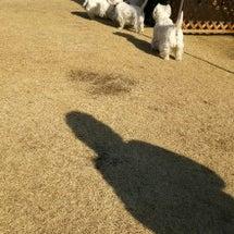 白犬祭だ~~