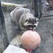 円山動物園に行ってき…