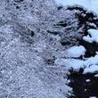 白山ろくの雪景色
