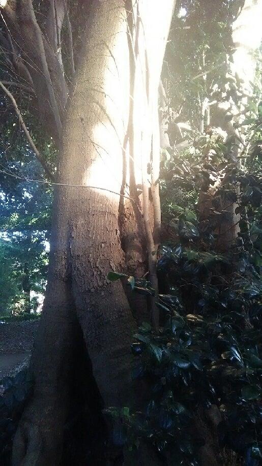 1208 中山神社 木