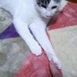 猫のお手手(ノ´∀`…