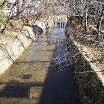 玉川上水までお散歩