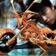 バイク型甲殻類…