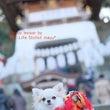 江ノ島で初詣♪「飼い…