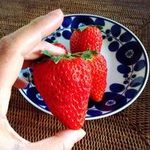 大きいイチゴにびっく…