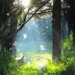 癒しの森、真我への道