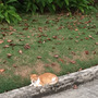 セブ島 猫達