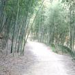 【韓国旅行】竹林浴で…