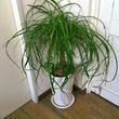 これ何て植物ですか?