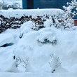 雪と鳥たち