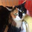 新入り保護猫の紹介