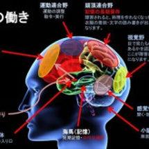 脳内麻薬(脳内物質)…