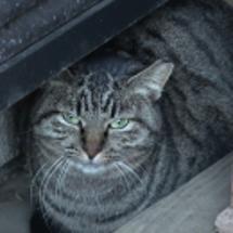 レイの兄弟猫