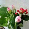 春を先取り!ピンクの…