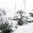 ゆき雪ゆき♡きれい♪