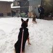 雪が積もったよ!