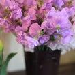 愛らしい春のお花達